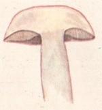 Подосиновик