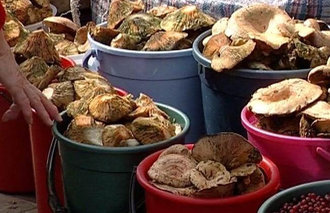 Где купить грибы в Тюмени