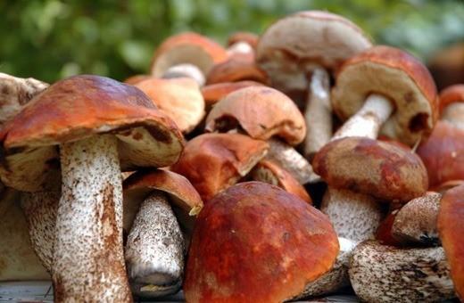 Ночной чемпионат грибников пройдет в Латвии