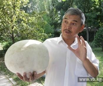 Гиганта весом три килограмма нашел и привез в Бишкек простой школьный учитель