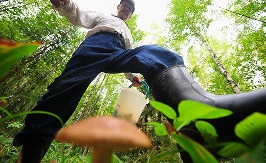Собирать грибы в Бельгии без знания их «национальной принадлежности» опасно для вашего кошелька