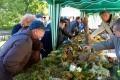 Вас ждет уникальная специализированная «Грибная выставка» где будут представлены многочисленные виды грибов Ленинградской области.