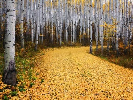 Из-за цвета растений и деревьев этот месяц зовется желтнем, жовтнем. Также месяц сентябрь называют ревун из-за дождей и непогоды, хмурень из-за уменьшения дневного света и хмурого неба.
