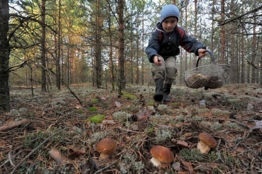 Этой осенью Брянщину накрыло грибами! С утра в электричках не протолкнуться – едут грибники с огромными корзинками, ведрами и рюкзаками.