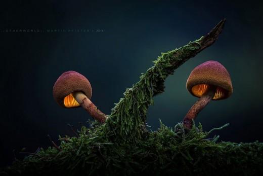 Немецкий фотограф Мартин Пфистер (Martin Pfister). Лесные грибы.