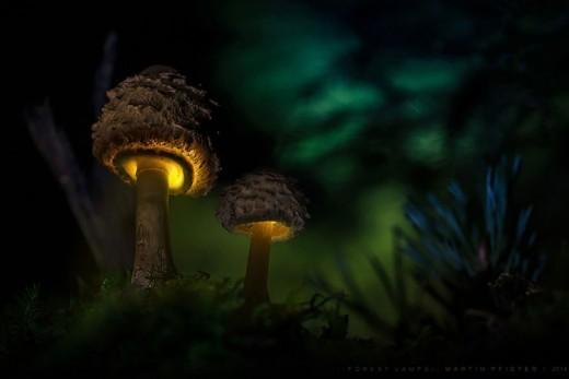 Светящиеся грибы на снимках Мартина Пфистера.