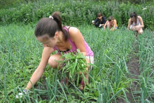 Федеральное агентство по делам молодежи совместно с Министерством сельского хозяйства планирует воссоздать трудовые студенческие лагеря.