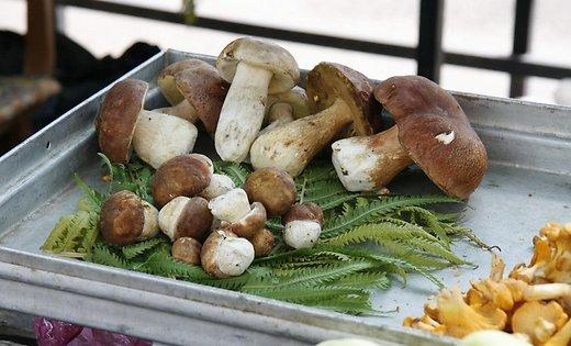Майские боровики на рынке можно купить по 100 евро за килограмм