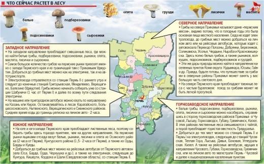 Карта грибных мест Прикамья