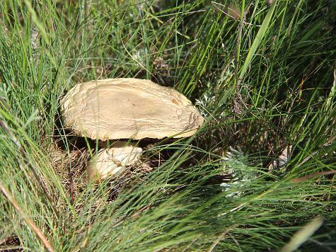 В Омской области пошли аномальные грибы