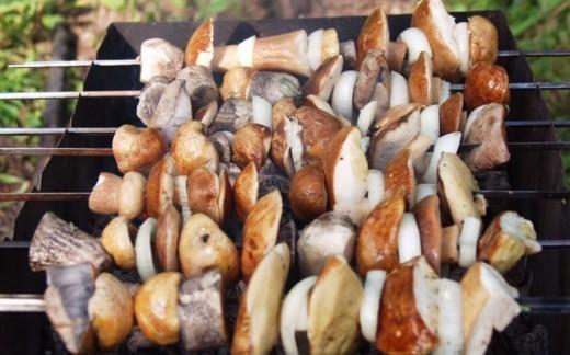 В России могут ввести налог на шашлыки в лесу