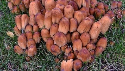 Калининградцы нашли в местных лесах грибы в январе