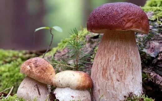 Первый «грибной» институт Европы откроется в Сории