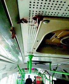 В городе Ухань в общественном транспорте выросли грибы