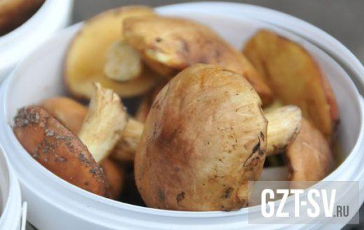 В ДальГАУ отмечают, что сезон грибов в Амурской области из года в год начинается в разные сроки и зависит от погоды — чем теплее и дождливее, тем раньше под кустиками вырастают первые «шляпки».