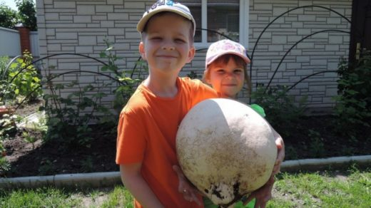 В россошанском селе Архиповка местные жители во время уборки улицы 1 Мая нашли гриб-дождевик диаметром около полуметра в среду, 22 июня.
