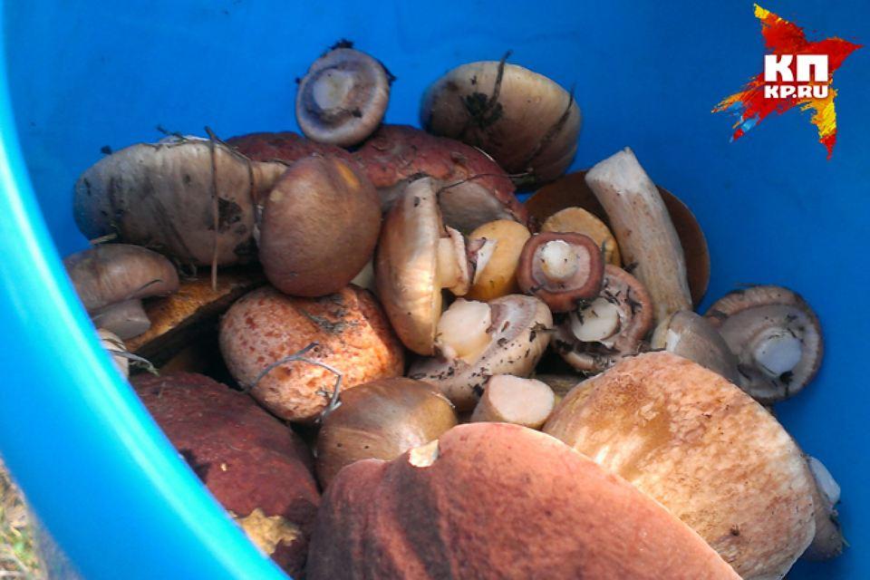 В тюменских лесах появились первые грибы