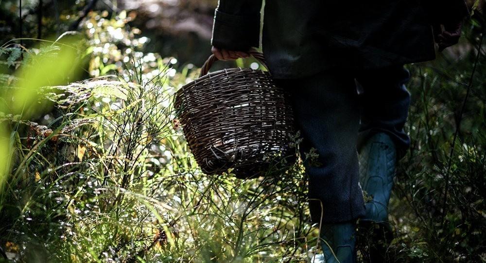 Минприроды: грибов и ягод в этом году будет мало