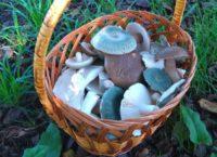 Где набрать грибов в Приморье?