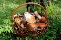 Готовимся к походу в лес «по грибы»