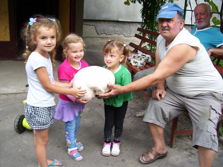 Волынянин нашел почти двухкилограммовый гриб