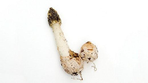 """Время сбора сырых грибов давно прошло — пора откупоривать закатанные. В этом выпуске Светлана Кесоян """"Тайноядения"""" рассказывает про странные экземпляры: грибы со вкусом оливок и такие, на которые неудобно смотреть — не то что щупать и есть."""