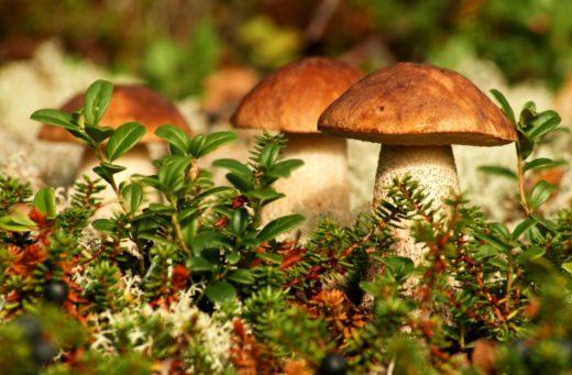 """Ученые Университета Майами провели новое исследование, которое показало, что грибы могут """"путешествовать"""" с дождем."""