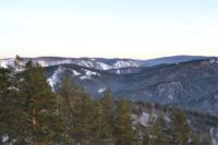 Эксперты предсказали нашествие вредителей на леса Красноярского края