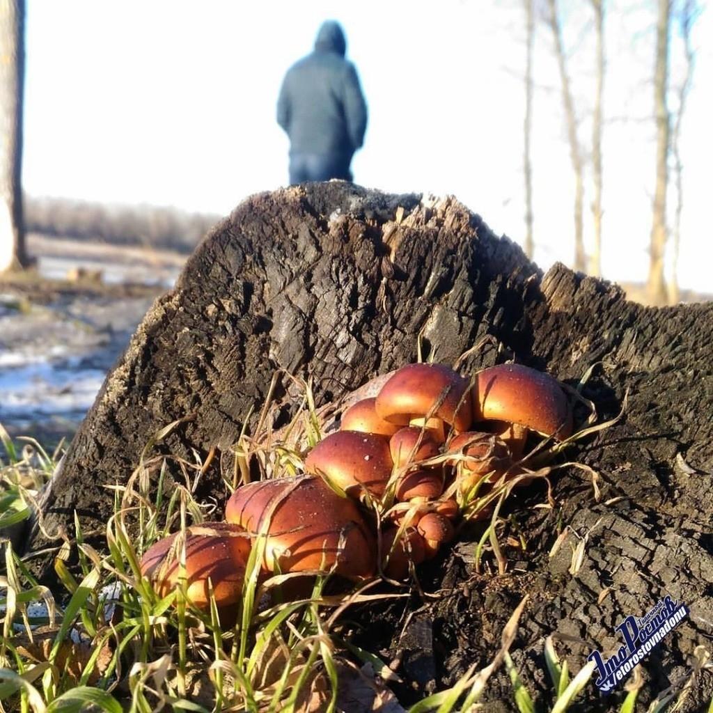 Грибная поляна в феврале поразила жителей хутора в Ростовской области
