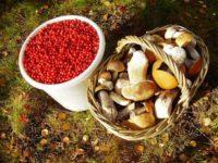 В Пензе запустят производство по переработке диких ягод и грибов