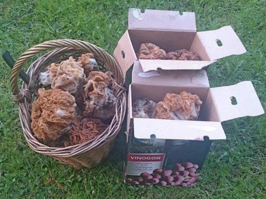 В рюкзачке с собой в лес берутся плоско сложенные картонные коробки, которые по мере необходимости раскладываются и наполняются грибами.