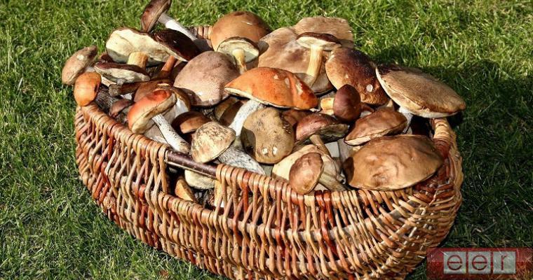 Ученые установили, что грибы способны уничтожить все человечество