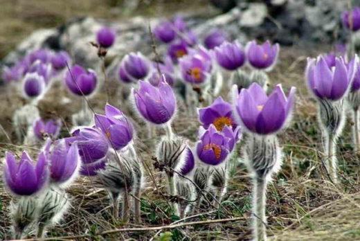 Сохранить редкие виды растений и животных от любопытных отдыхающих пытаются экологи в Московской области.