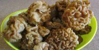 В ярославских лесах пошли грибы: прогноз на сезон