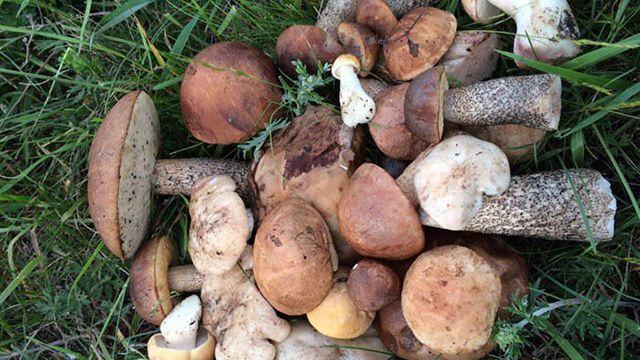 В Челябинской области наступила грибная осень