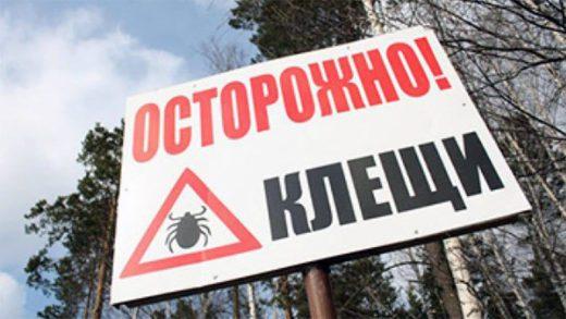 Более 120 случаев клещевого энцефалита и почти 600 случаев иксодового клещевого боррелиоза зарегистрировано в России с середины марта.
