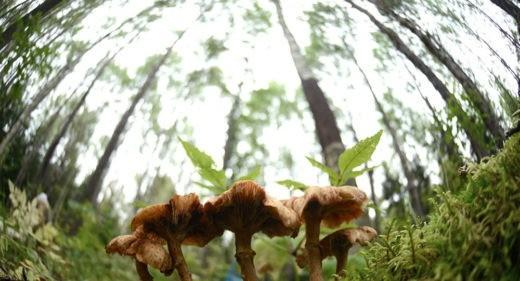 В министерстве окружающей среды поясняют, что прежняя редакция Лесного кодекса в части, касающейся штрафов, давно устарела. Положения законодательства, вступившие в силу в 1997-м, году не отвечают современным реалиям