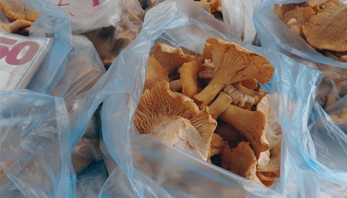 Белых грибов в бийских лесах нынче нет, а вот лисички — в изобилии