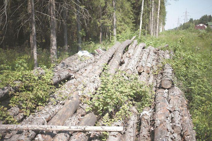 Холодная погода повлияла на лесную растительность
