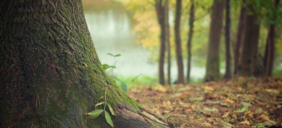 Грибы можно собирать в лесах, обработанных от шелкопряда, через неделю