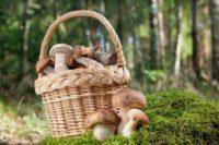 Есть ли сейчас грибы в лесу в Подмосковье: какие грибы в августе 2017