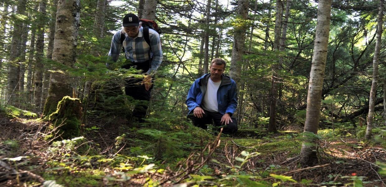 Шведские ученые нашли редкие грибы — мацутакэ на Сахалине