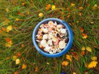 Многочисленная армия любителей «третьей охоты» Самарской области продолжает надеяться, что грибы этой осенью все-таки появятся.
