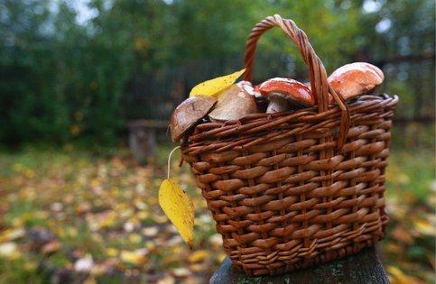 В Госдуме задумались об урегулировании сбора грибов и ягод