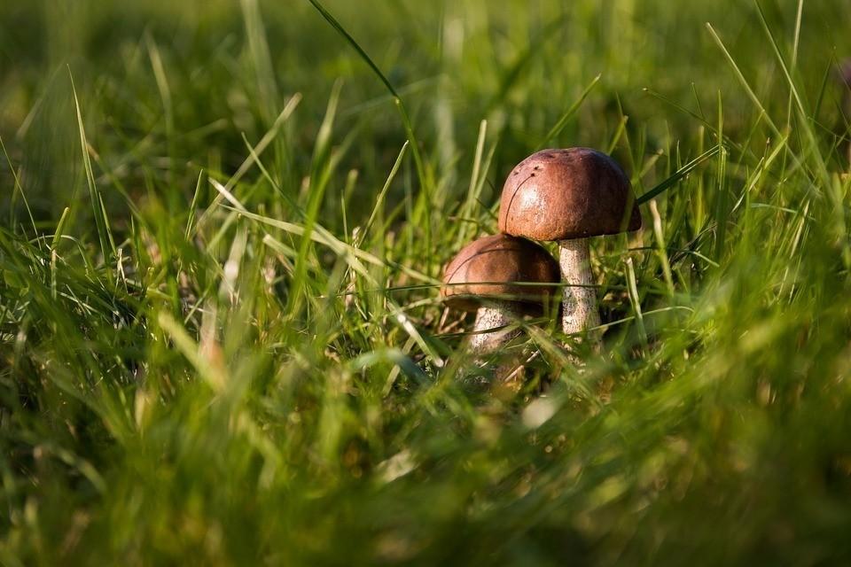 Роспотребнадзор советует не собирать старые и червивые грибы