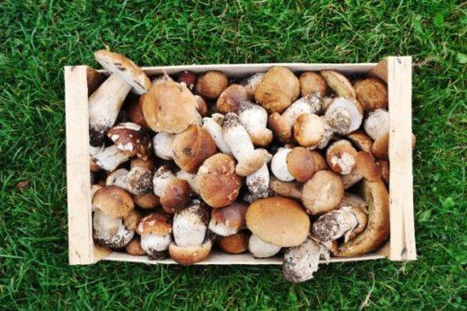 Депутаты Госдумы решили, что нынешнее лето последнее, когда можно бесплатно собирать грибы и ягоды