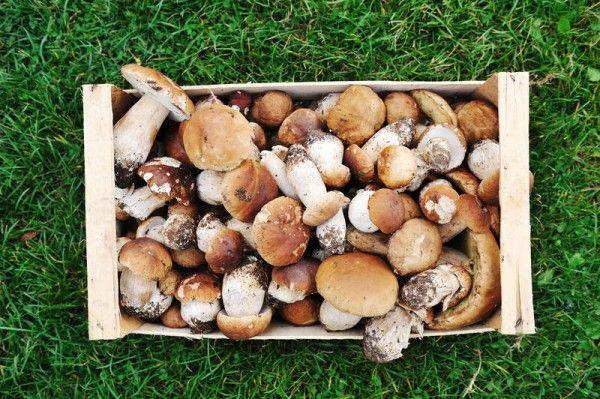 Последнее лето, когда можно бесплатно собирать грибы и ягоды
