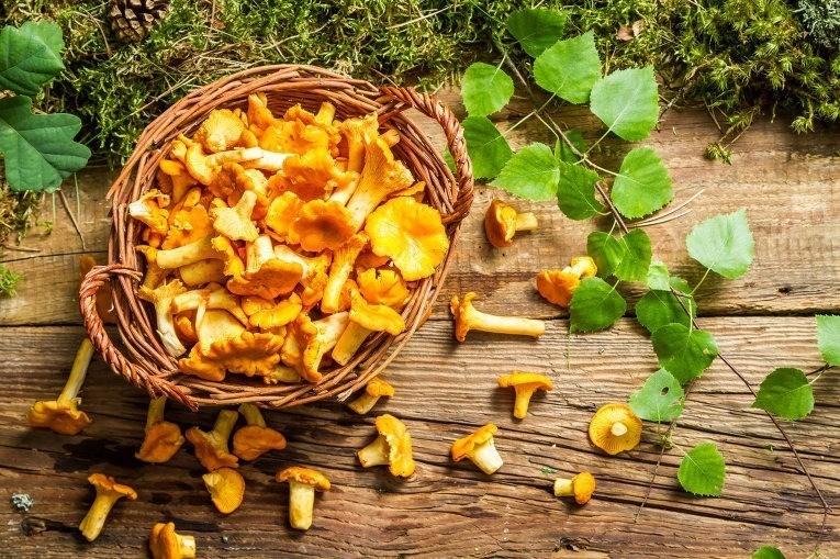 Сибирские ученые будут бороться с описторхозом с помощью грибов