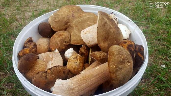 Пока приморцы машинами собирают гигантские грибы, Роспотребнадзор бьёт тревогу