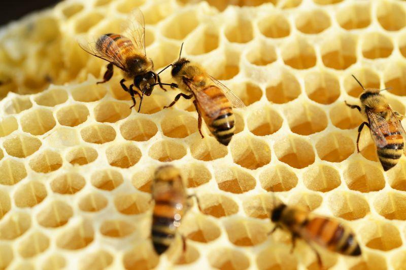 Могут ли грибы помочь в защите здоровья пчел?